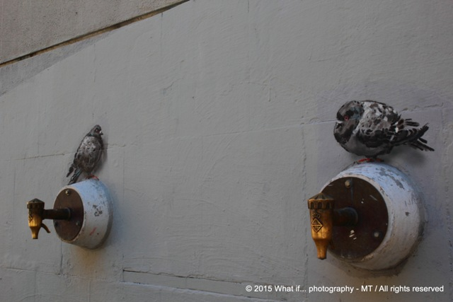 Pigeons or painting?