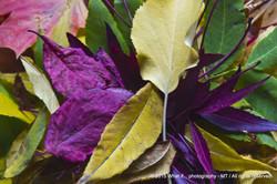 Autumn colour composition