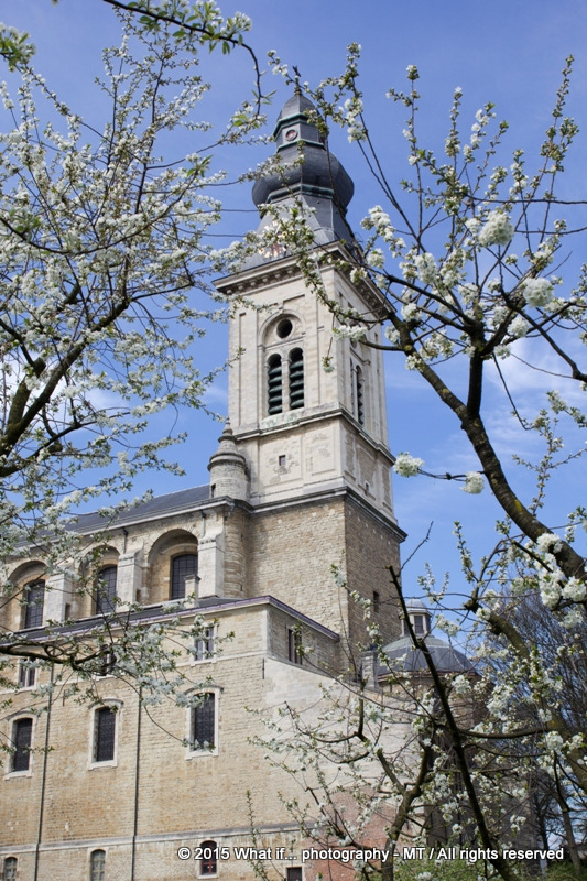 View of Sint-Pieters church through the apple blossoms