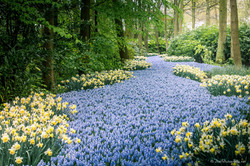 River of flowers through the forest