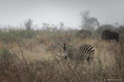 Rise of mist on the savanna
