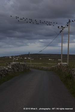Guards of the scary road, Inishmore - Aran Islands (Ireland)