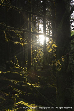 Sunset in the forest, Clare (Ireland)