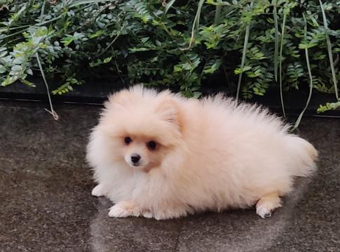 """""""Zowel Teddy onze pup als wij veel geleerd en kennis opgedaan! Ik raad iedereen beroep te doen op Magda bij de aankoop van een pup!"""" Magali L."""