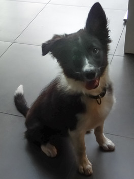 """""""Just the best dog trainer ever. Some really magic tricks that makes the classes really fun and productive. Highly recommended...."""" Leandro F."""