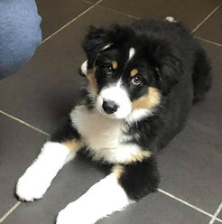 """""""Magda was a great help getting through the first rough weeks of my puppy. With her help I got used to the big change and seeing my puppy evolve even through the short span of 3 weeks. Thanks again Magda!"""" Gaetan S."""