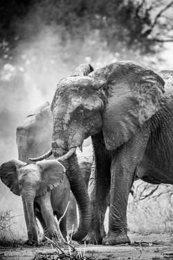 Mum & her baby elephant
