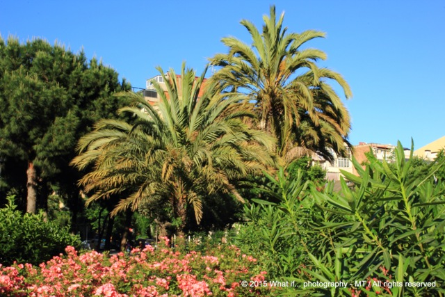 Palm trees in the park