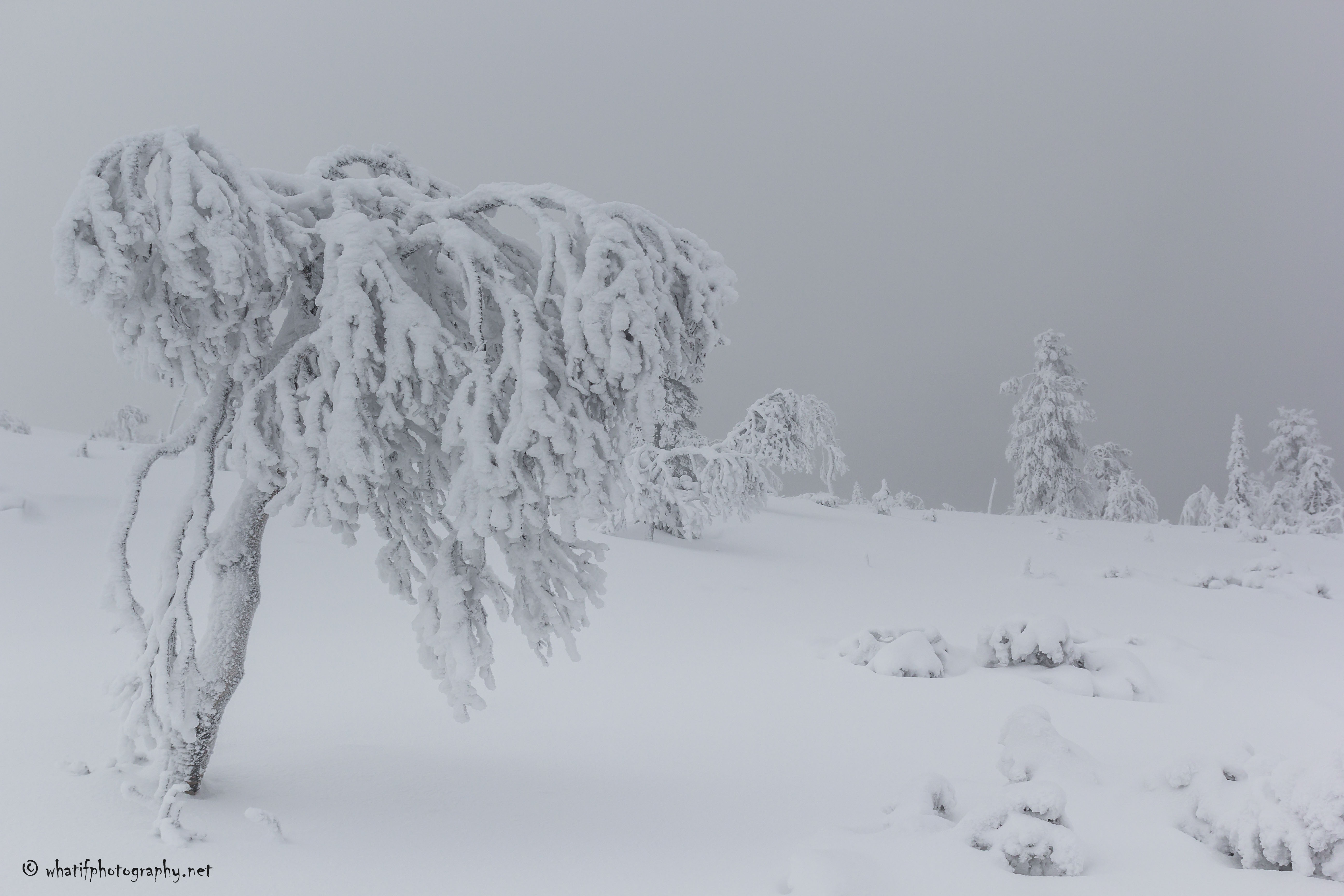 Cold Lapland