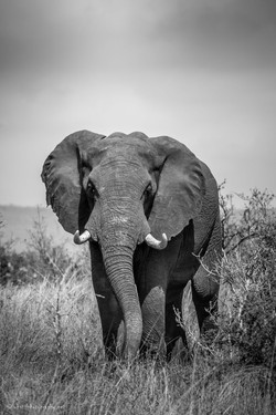 Beauty of elephant