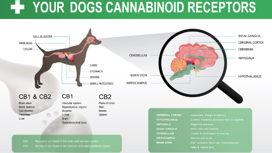 Dog Endocannabinoid System CBD Hemp Oil