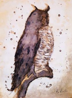 Coffee_Owl