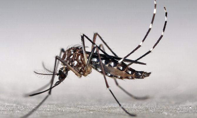 Saúde intensifica combate à dengue