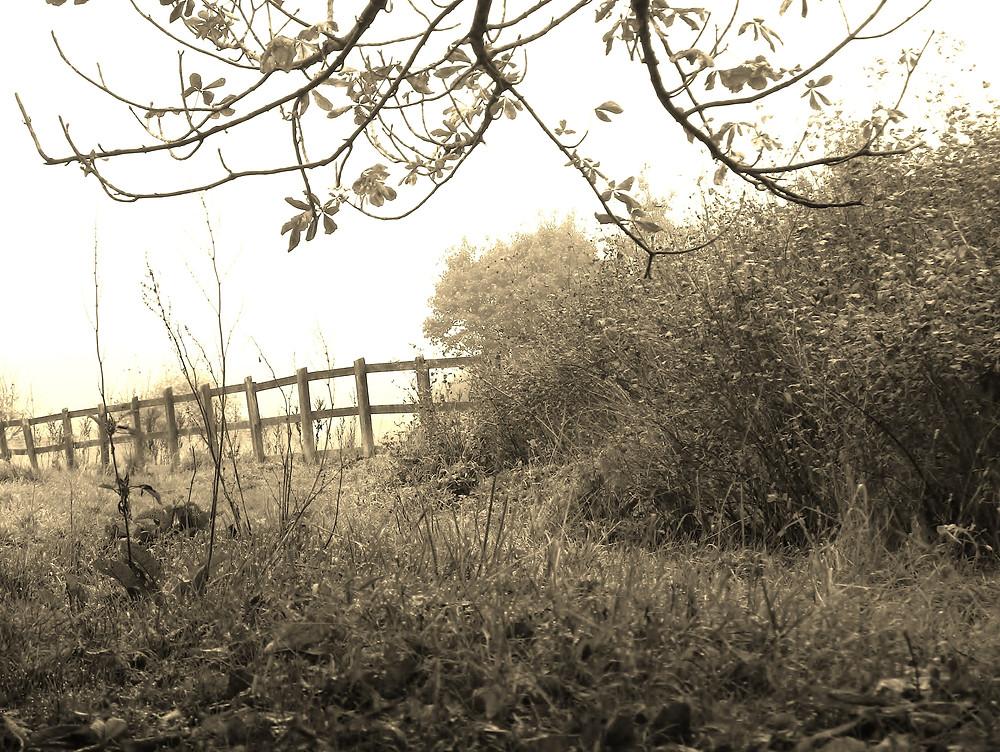 Lismore Fields Buxton Spa Ancient Civilisation