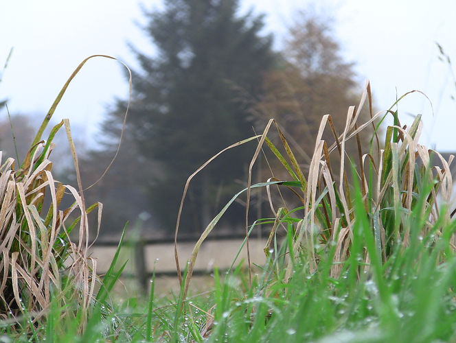 Lismore Fields