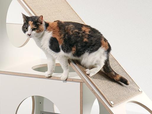 Drei gute Gründe für die Katzenmöbel von pawsonwood