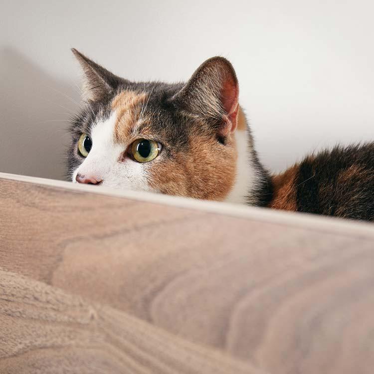 pawsonwood Katzenmöbel zum Schlafen und Verstecken