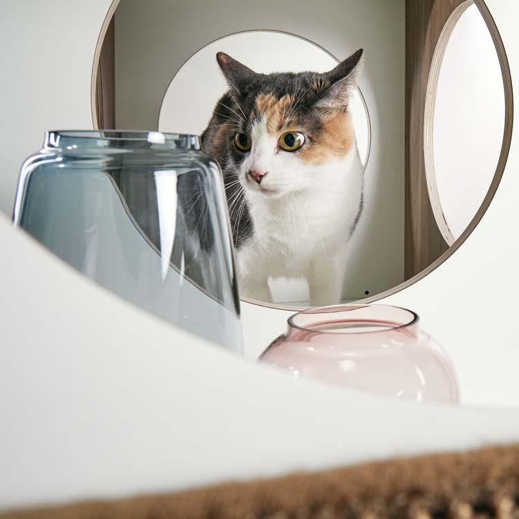 pawsonwood Katzenmöbel zum Dekorieren und Ausruhen