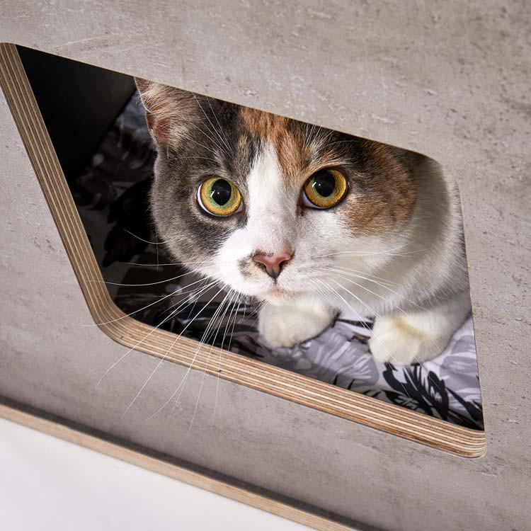 pawsonwood Katzenmöbel – 100% Made in Germany – hygienisch abwischbare Flächen