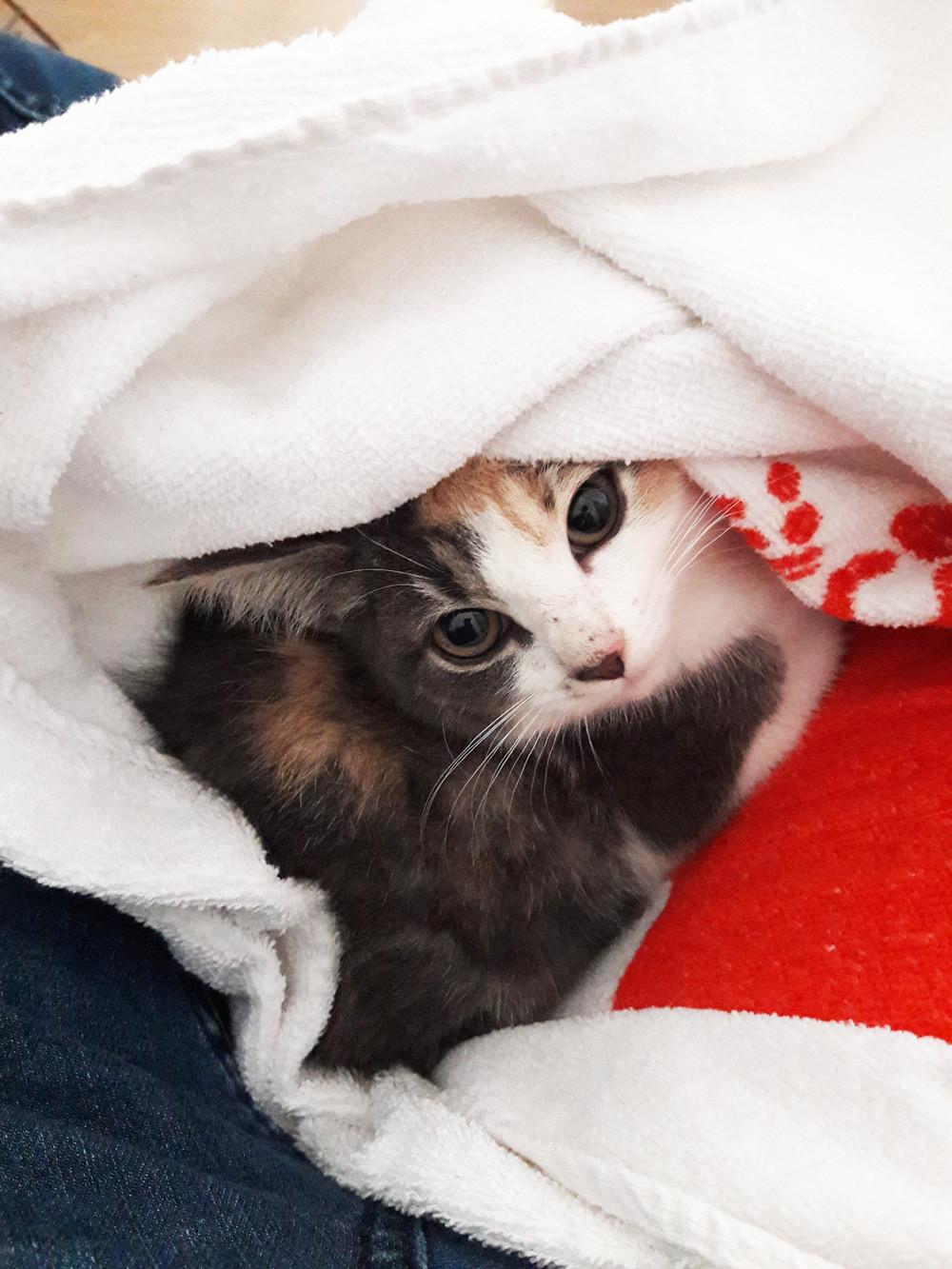 pawsonwood Katzenmöbel – Baby, die ich als streunendes Baby im Park eingesammelte