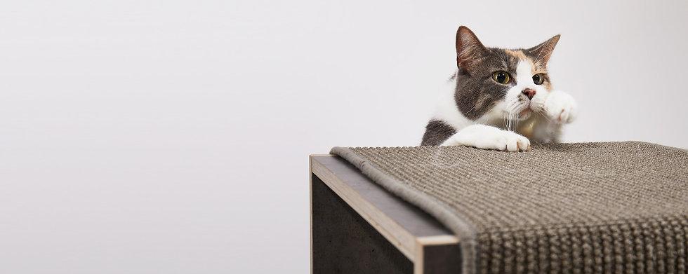 pawsonwood | Ein Blog rund um die Katze
