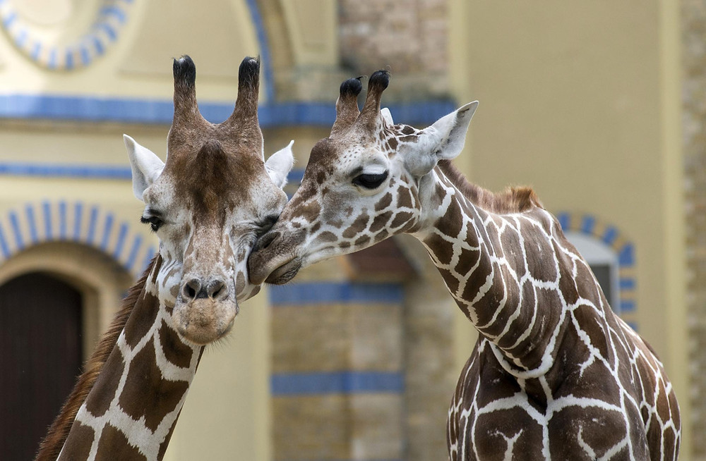 Zu den Partnern von Ticketcounter gehören neben Zoos auch Vergnügungsparks, Museen und andere Freizeiteinrichtungen. (Foto: Zoo Berlin)
