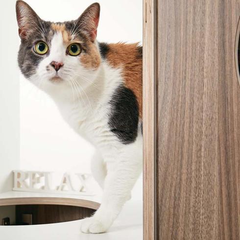 Baby im pawsonwood Katzenkratzmöbel   L – Der Katzentraum  Korpus: Weiß  Blenden: Nussbaum
