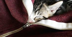 Vom Kratzbaum-Frust einer frisch gebackenen Katzenmama und wie alles begann
