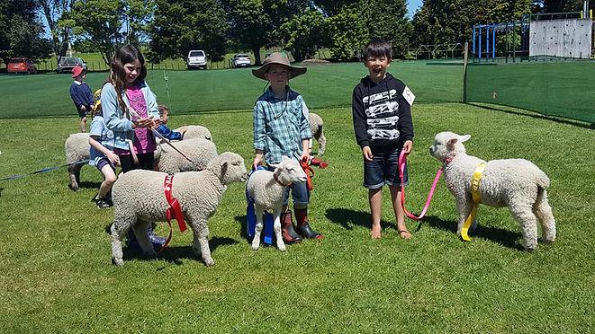 lamb and calf.jpg
