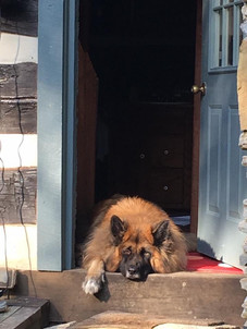 Rufus, studio guardian