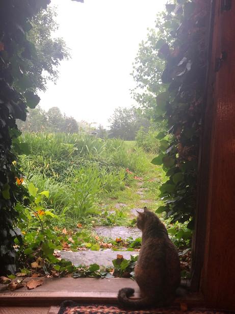 Luna watching the rain