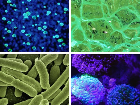 UH joins new national consortium to advance microbiome research