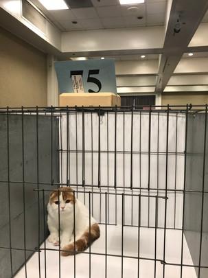 6th best SH kitten