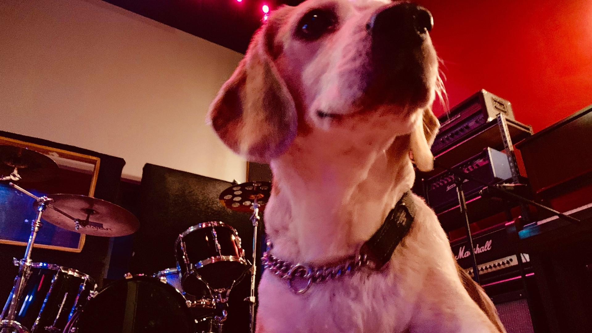 Atari Studio Dog
