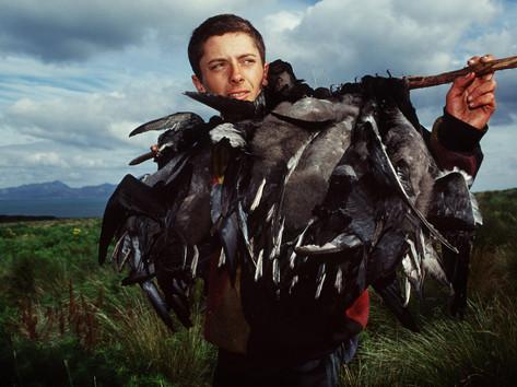 Mutton Birds.jpg