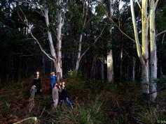 spotlighting in wombat.jpg
