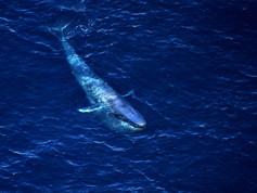 Gina's whale.jpg