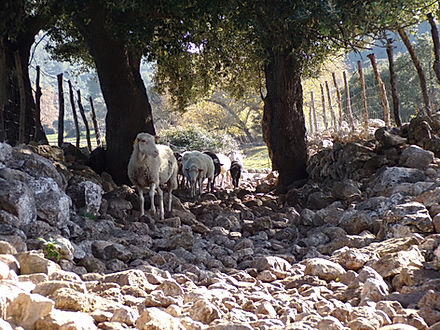 Bosque de Orient - Salt des Freu Randonnée Majorque