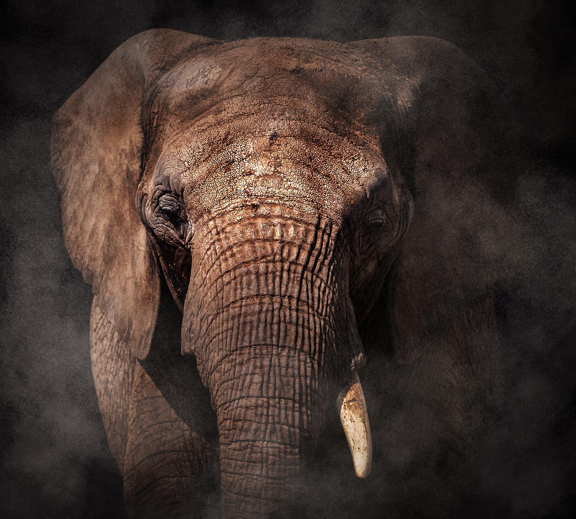 Elefant-1