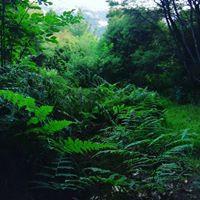 Sundari green.jpg