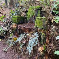 Tree stump seat.jpg