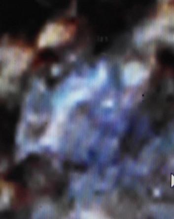 ВК МБ 132, 6  Голова коровы.jpg