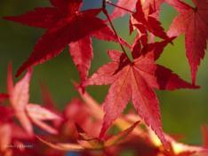 「秋分の日」営業致します
