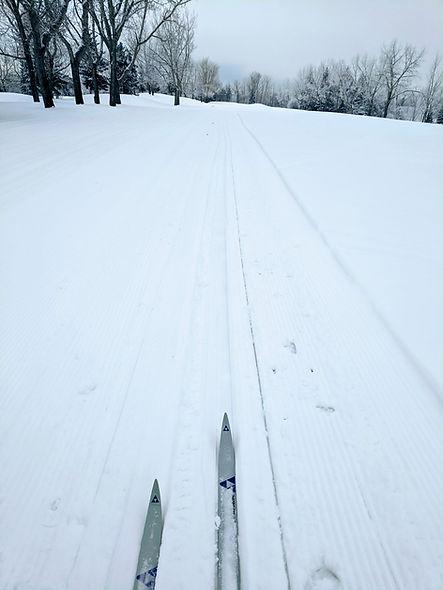 sno xc skis.jpg