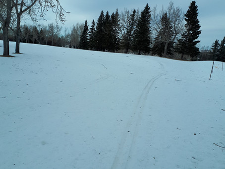 February 26 Update:  Spring snow Thursday daytime + no grooming  = crack of noon ski club...maybe