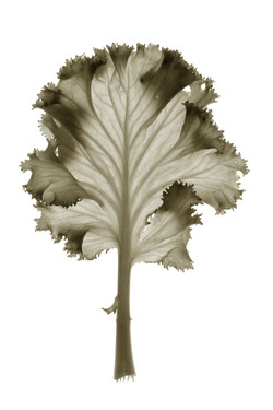 Tree, Imbued with leaves-07, 2004