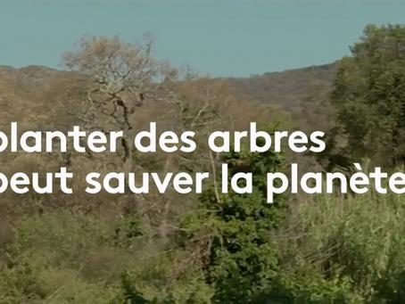 Des milliards d'arbres pour sauver la planète
