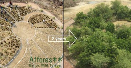 Nantes : des micro-forêts