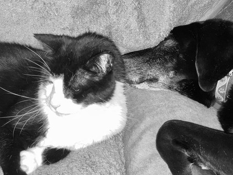 Dog or Cat Person: Which one are you?