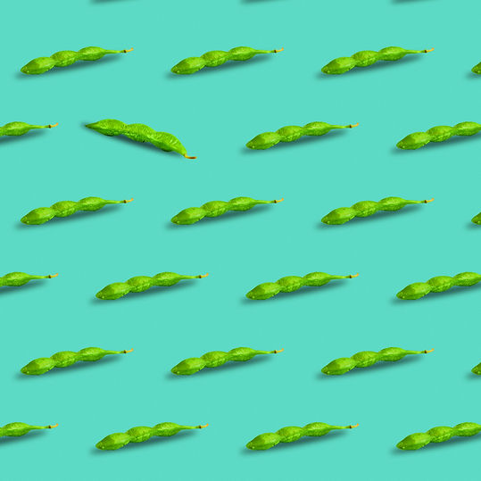 Edamame or soybeans pod pattern isolated on a turquoise background..jpg